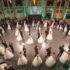 """TORNA L'EVENTO BENEFICO """"IL GRAN BALLO VIENNESE DI ROMA"""". PEPARINI RICEVE IL PREMIO VINDOBONA"""